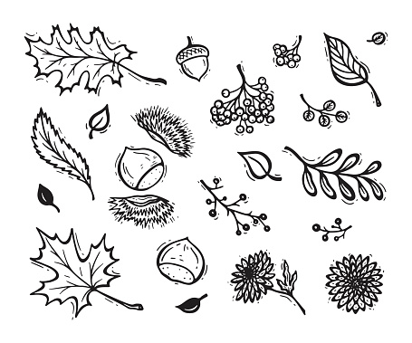 Vector Autumn Harvest Symbols Hand Drawn Doodle Different