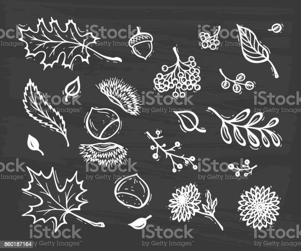 Vector autumn harvest symbols hand drawn doodle different tree leaves vector id860187164?b=1&k=6&m=860187164&s=612x612&h=0cuzuefc ovqa0o3ttidnewlnp56 ki1snzxcwtmxfo=