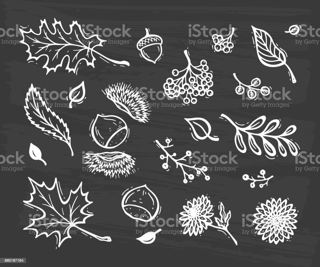 Vector Autumn Harvest symbols. Hand Drawn Doodle Different Tree Leaves, Chestnuts, Flowers and Berries. Happy Thanksgiving Day Greeting card template vector art illustration