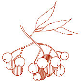 Vector autumn red sorbus plant. Berry plant botanical garden floral foliage. Isolated illustration element. Isolated illustration element. Vector plant for background, texture, frame or border.