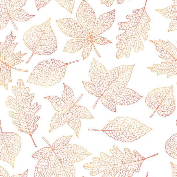 illustrazioni stock, clip art, cartoni animati e icone di tendenza di vector autumn seamless pattern with oak, poplar, beech, maple, aspen and horse chestnut leaves outline on the white background. fall line art of foliage. - foglie