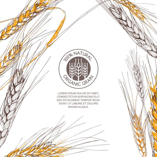 Vector background for label, package. Hand drawn sketch illustration of wheat. Vector background for label, package. Hand drawn sketch illustration of wheat. Concept for organic flour, harvest and agriculture, grain, cereal products, bakery, healthy food. bread borders stock illustrations