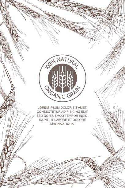 Vector background for label, package. Monochrome sketch illustration of wheat. Vector background for label, package. Monochrome sketch illustration of wheat. Concept for organic flour, harvest and agriculture, grain, cereal products, bakery, healthy food. bread borders stock illustrations