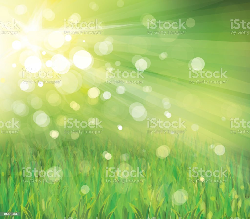 Vector background spring grass with light rays royalty-free vector background spring grass with light rays stock vector art & more images of design