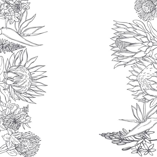 Vector  background with African flowers Hand drawn African flowers. Vector  background. Sketch illustration. south africa stock illustrations