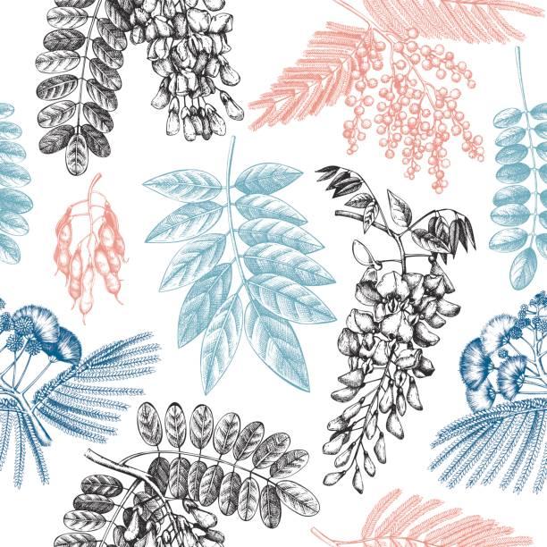 vektor-hintergrund mit blühenden bäumen - robinie stock-grafiken, -clipart, -cartoons und -symbole