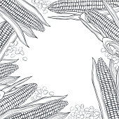 Vector  background with hand drawn corn. Sketch  illustration.