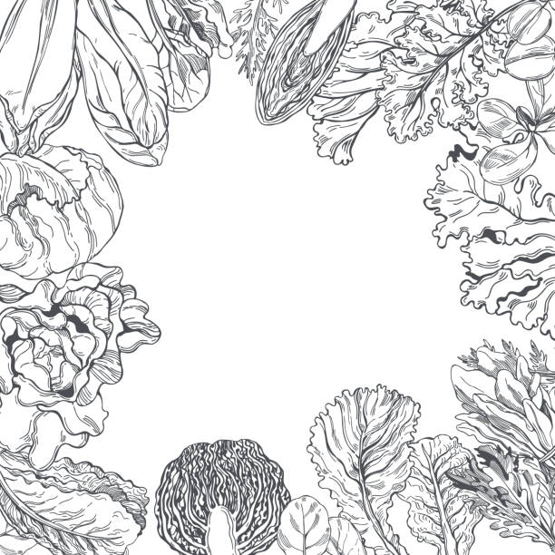 vektorhintergrund mit verschiedenen salatarten - farbsättigung stock-grafiken, -clipart, -cartoons und -symbole