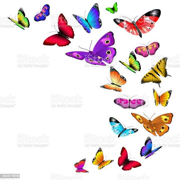 Vector background with flying butterflies vector id544571618?b=1&k=6&m=544571618&s=612x612&h=xu he54mhbhtmmvzitr3sgvjnlhd6cctf2zgxs2nmxo=