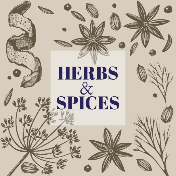 ilustraciones, imágenes clip art, dibujos animados e iconos de stock de fondo de vector con mano dibujado con hierbas y especias. ilustración de dibujado a mano tinta. ilustración de orgánico y fresco especias - comida india