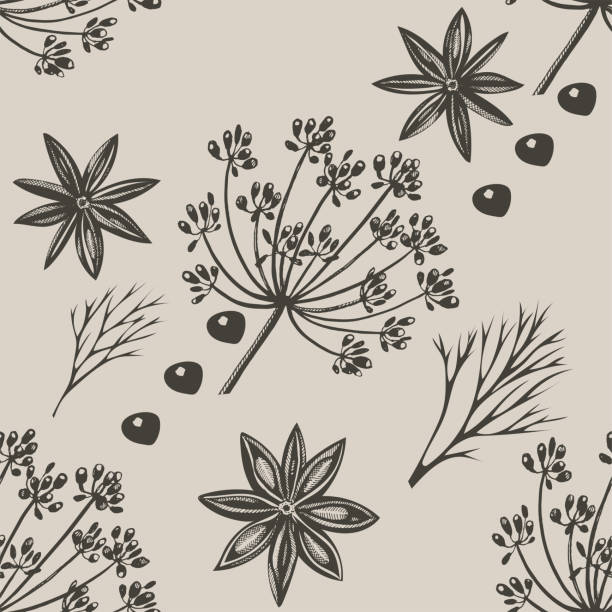 Vector background with hand drawn herbs and spices. Hand drawn ink illustration. Organic and fresh spices illustration Vector background with hand drawn herbs and spices. Hand drawn ink illustration. Organic and fresh spices illustration star anise stock illustrations