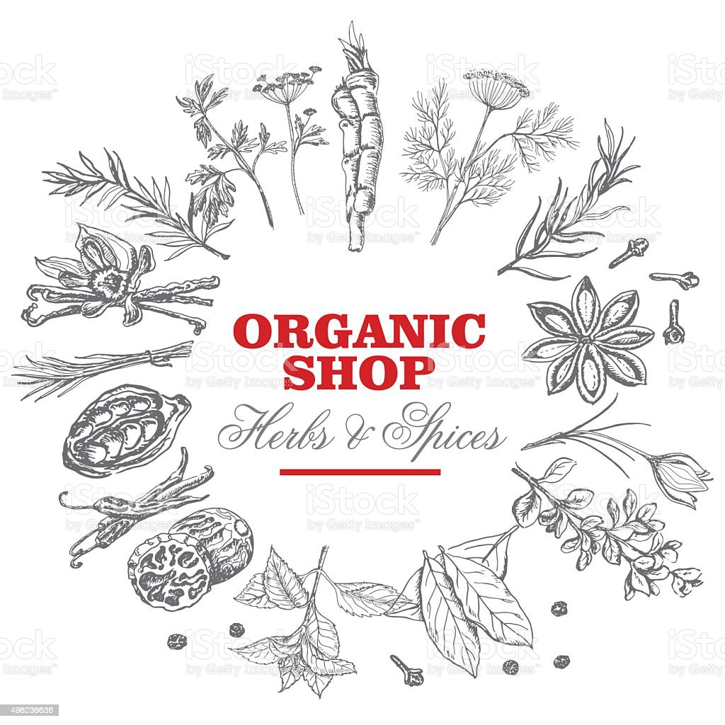 Vector background with isolated spices and an inscription in the vector art illustration
