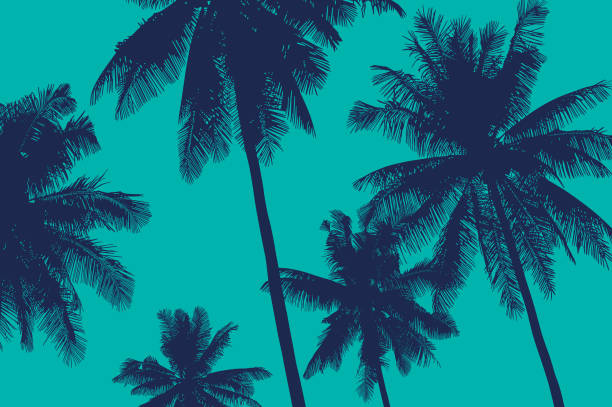 Vector background with palms Coconut trees tropical vector illustration beach backgrounds stock illustrations