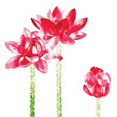 Vector background with red watercolor lotus for wedding invitation or flyer