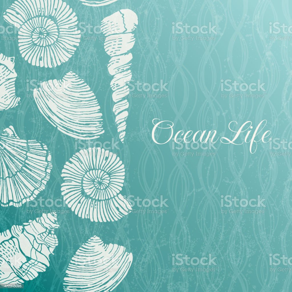 Vector background with sea shells vector art illustration