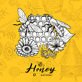 Vector background with sketched contoured honey theme elements and place for text. Beekeeping and honeycomb, sketchy dessert honey illustration