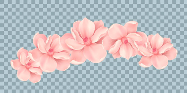 vector bali flowers border isolated on transparency grid background - hawaiian lei stock illustrations, clip art, cartoons, & icons