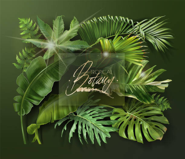 Vector banner with green tropical leaves on green Vector banner with green tropical leaves on dark green background. Luxury exotic botanical design for cosmetics, spa, perfume, aroma, beauty salon, travel agency, florist shop banana borders stock illustrations