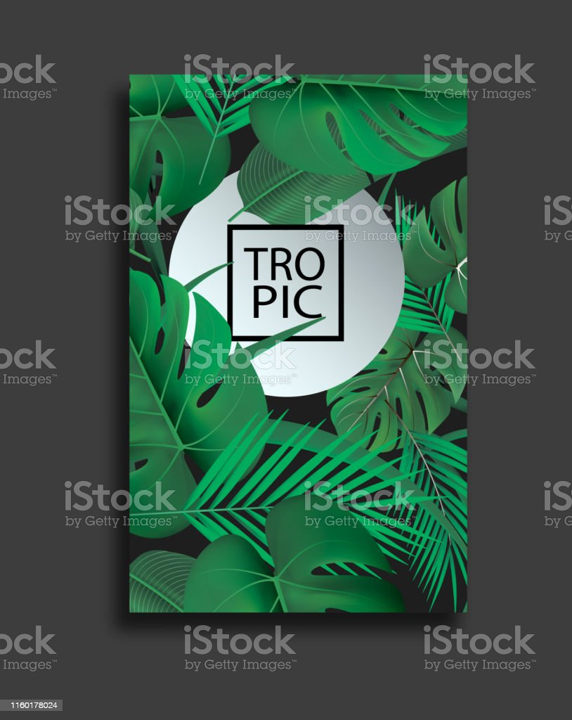 Vector Banners Set With Green Tropical Leaves On Black Background Exotic Botanical Design For Cosmetics Spa Perfume Beauty Salon Travel Agency Florist Shop Best As Wedding Invitation Cards Stock Illustration Download