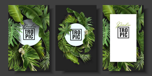 illustrazioni stock, clip art, cartoni animati e icone di tendenza di vector banners set with green tropical leaves - foglie
