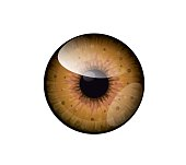 Vector beautiful brown,honey eye