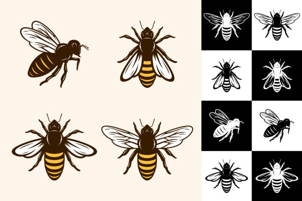 Vector bee icons Vector bee icons collection on different backgrounds. beekeeper stock illustrations