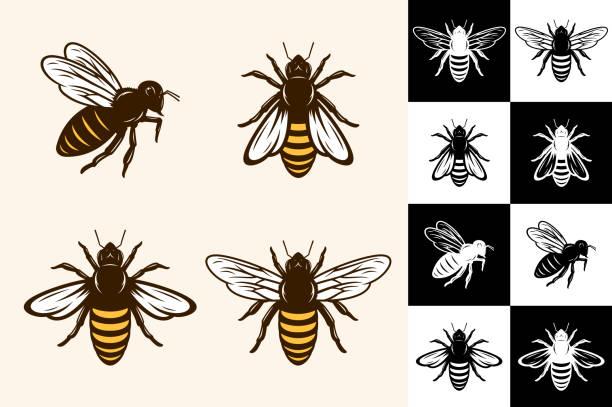 ilustrações de stock, clip art, desenhos animados e ícones de vector bee icons - abelha