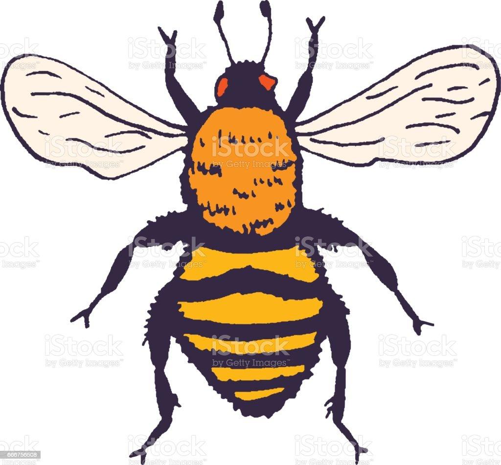 Ilustración de Ilustración De Vector Abeja Bosquejo Con Insectos De ...