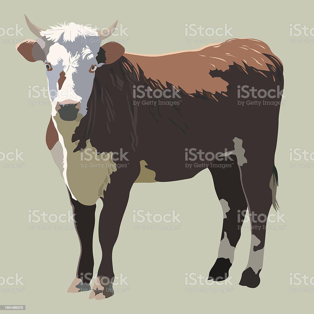 Vector Beef Cattle royalty-free stock vector art