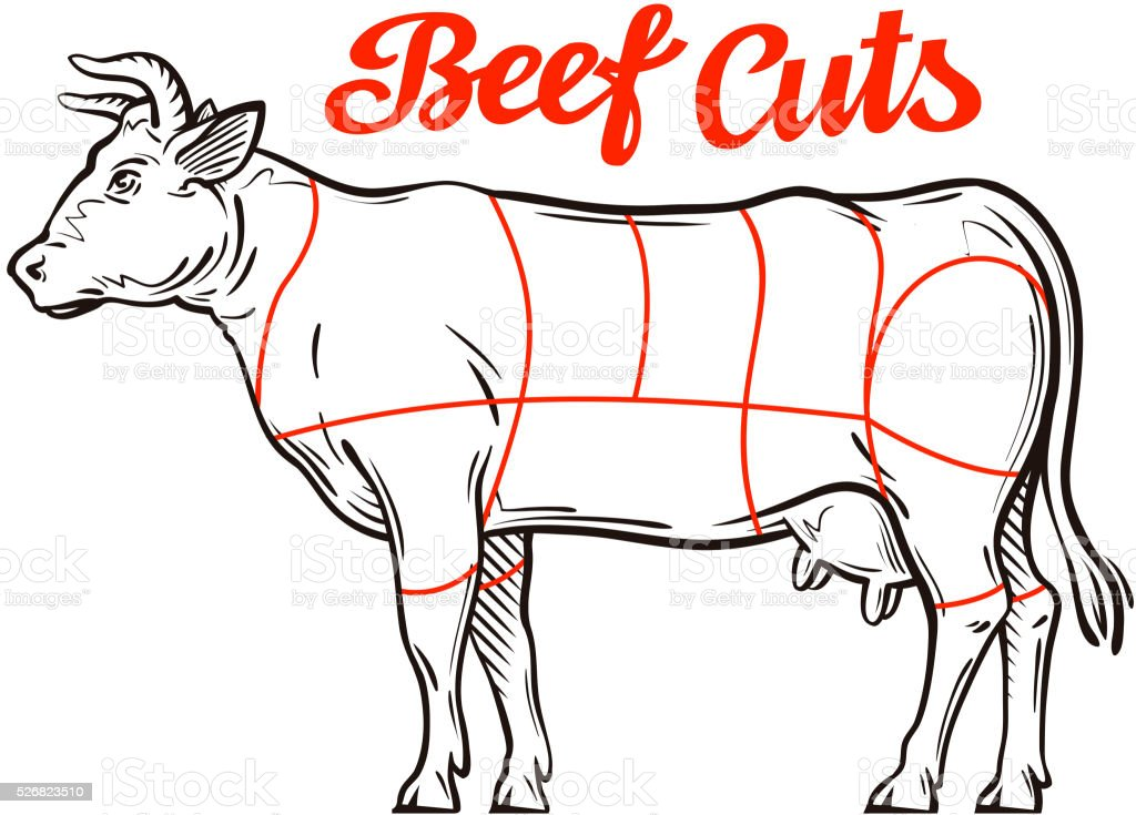 vector beef chart. meat cuts, butcher shop vector art illustration