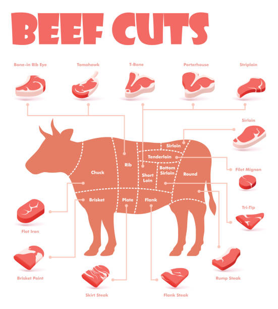 Vector beef cuts chart Vector beef cuts chart and pieces of beef, used for cooking steak and roast - t-bone, rib eye, porterhouse, tomahawk, filet mignon, striploin, sirloin, tri-tip and other popular steak cuts beef stock illustrations