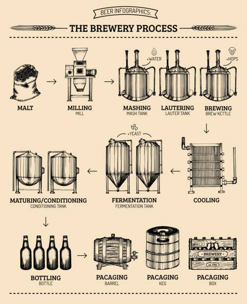 Vector beer infographics with illustrations of brewery process. Ale producing design. Lager production sketched scheme. vector art illustration
