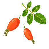 vector berries of dogrose
