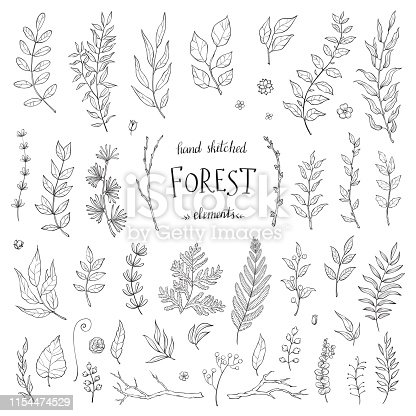 Vector Big Set hand drawn leaves - herbs and leaf. Collection garden, wild foliage, flowers and branches. Illustration isolated on white background.