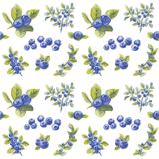 vector bilberry pattern vector art illustration