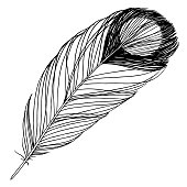 Bird feather from wing isolated. Vector feather for background, texture, wrapper pattern, frame or border. Black and white engraved ink art. Isolated feathers illustration element.