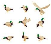 Vector bird icon collection.