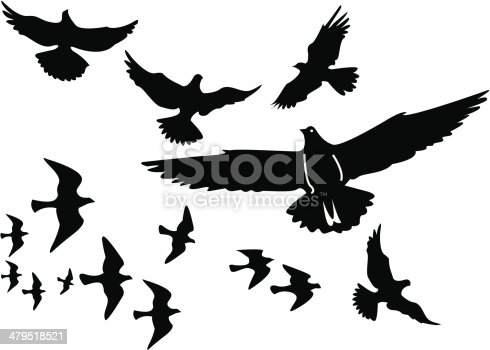 A flock of birds - or split them up as you like.