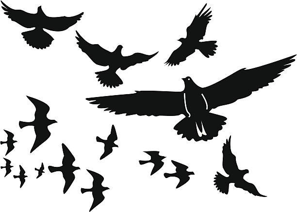 Vector birds silhouettes A flock of birds - or split them up as you like. flapping wings stock illustrations