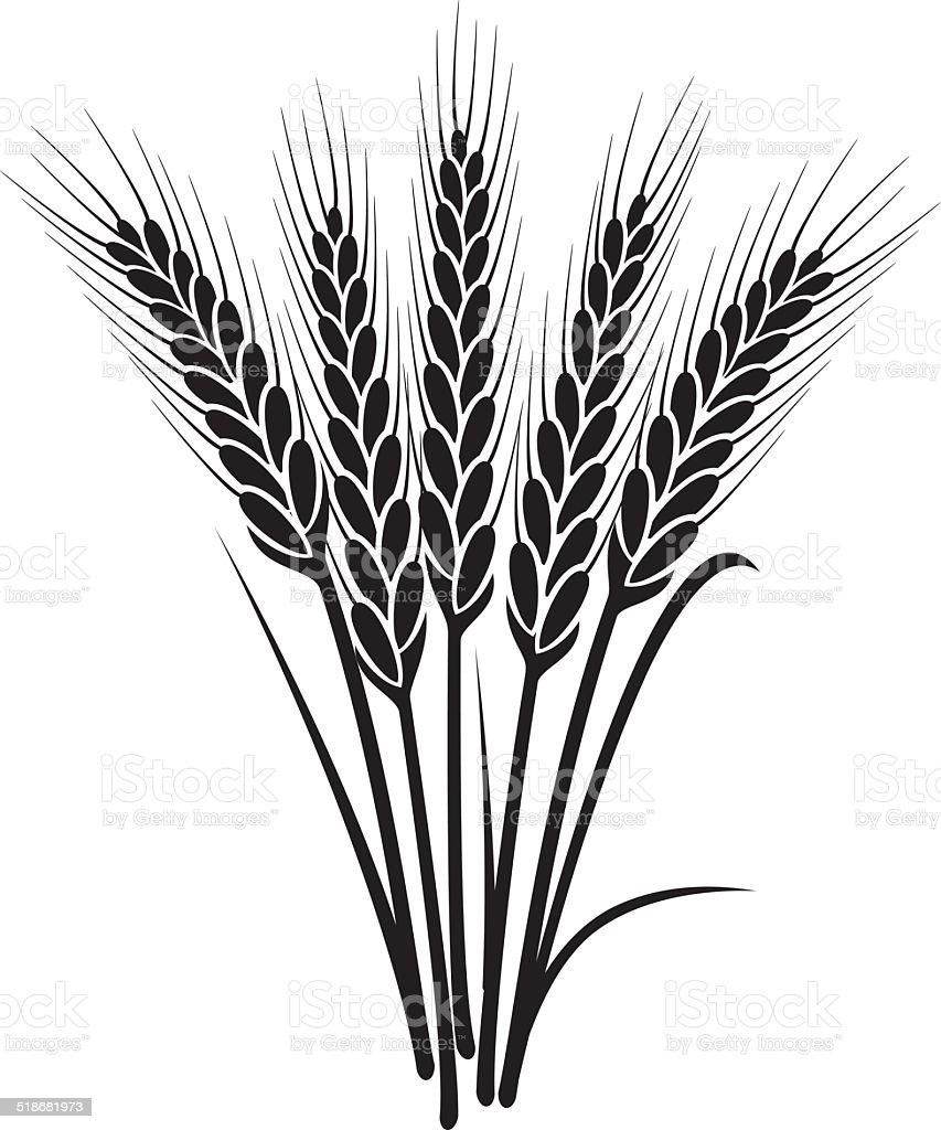 vector black and white bunch of wheat ears vector art illustration