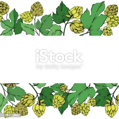istock Vector Black and white engraved humulus ink art . Green leaf. Frame border ornament square. 1190229439