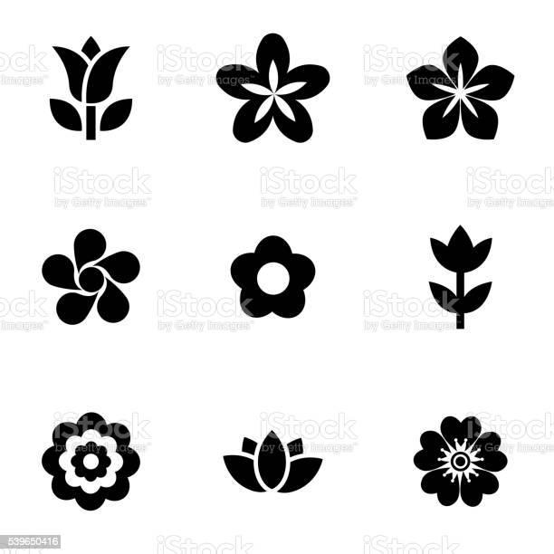 Vector black flowers icon set vector id539650416?b=1&k=6&m=539650416&s=612x612&h=4fyp971pqrdclct1ugqwcloxumfiqjfxospzkjmjphk=