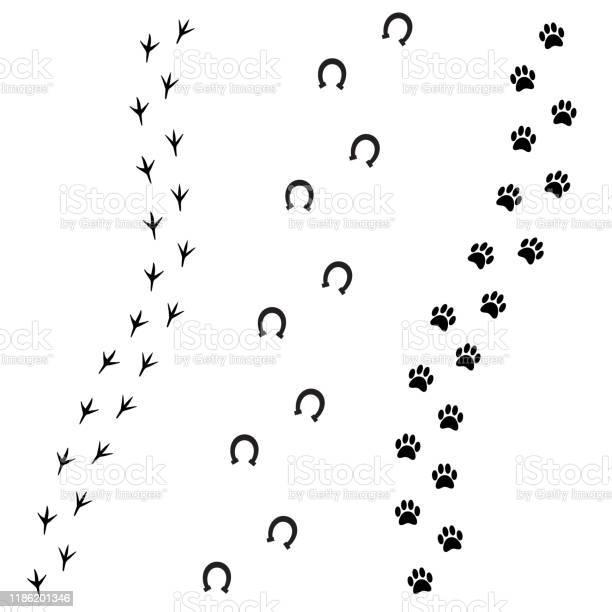 Vector black foot prints of dog horse and bird vector id1186201346?b=1&k=6&m=1186201346&s=612x612&h=uhsl0eseky15o19t5k4iu xmfbop5jdorccwu3jfvhc=