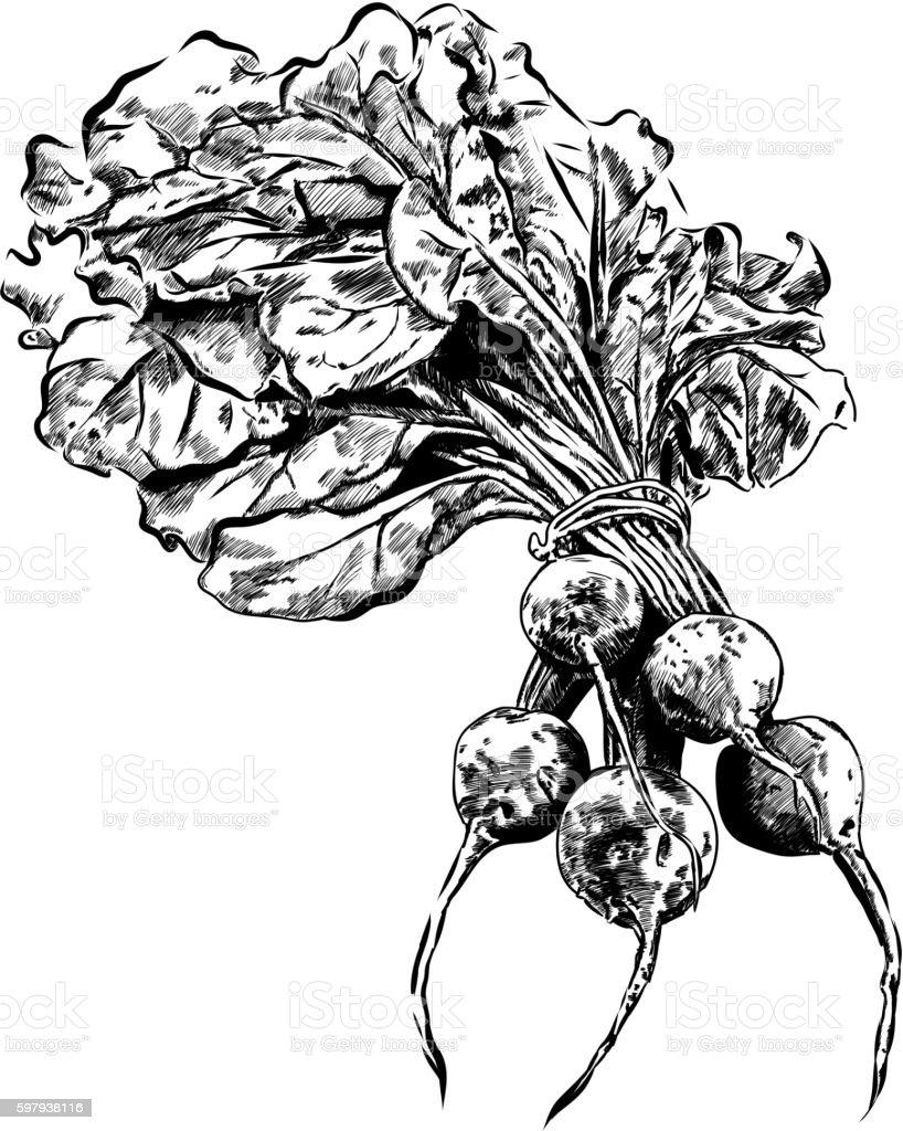 vector black hand drawn illustration of beet. EPS 10 ilustração de vector black hand drawn illustration of beet eps 10 e mais banco de imagens de abstrato royalty-free