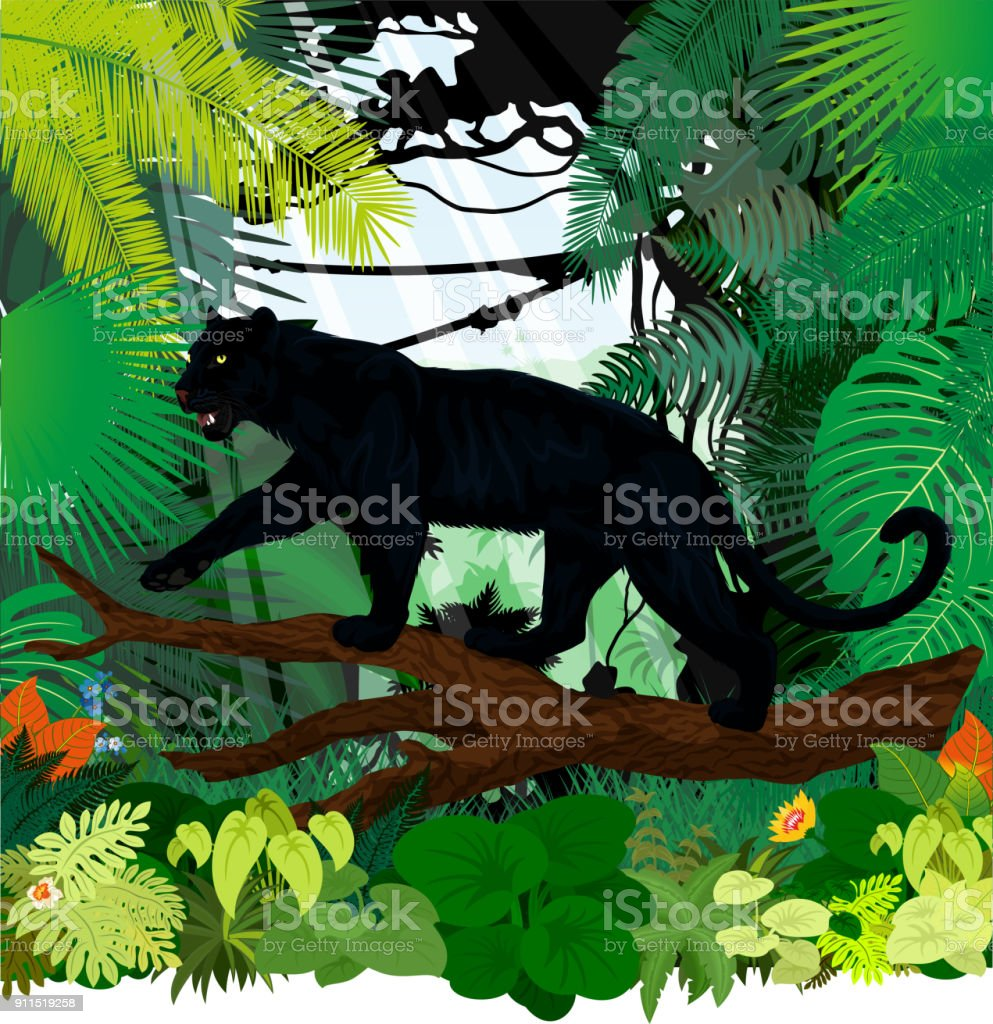 vector black panther leopard jaguar in jungle rainforest vector art illustration