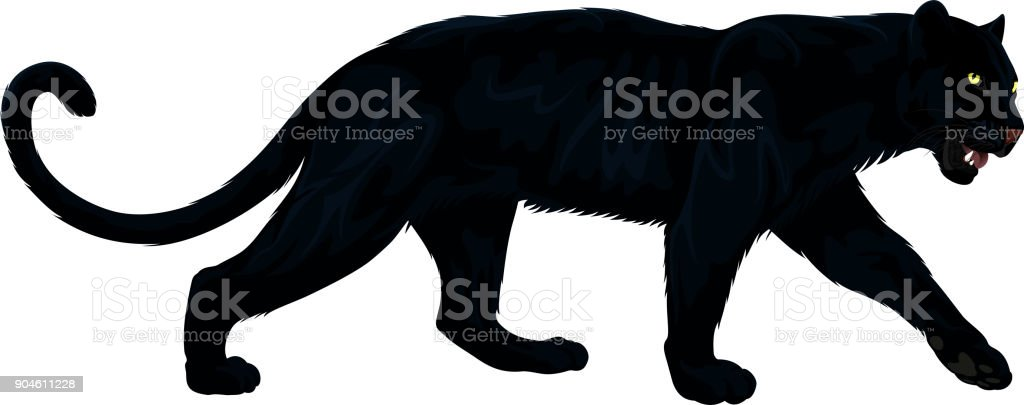 vector black panther vector art illustration