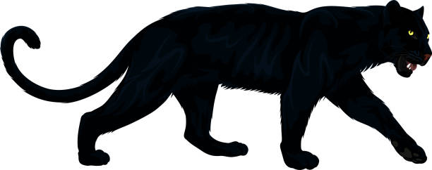 vector black panther - jaguar stock illustrations