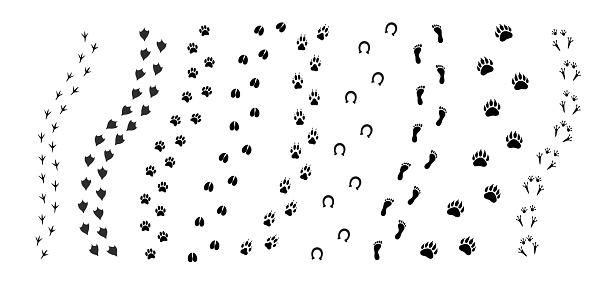Vector black set bundle of different animals foot print path tracks