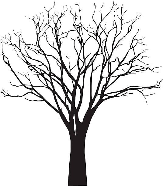 vektor schwarze silhouette von kahler baum - winterruhe stock-grafiken, -clipart, -cartoons und -symbole