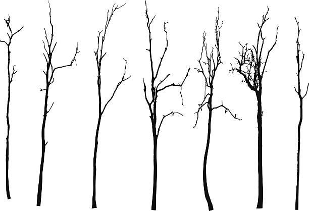 wektor czarna sylwetka z bezlistne drzewo - gałązka stock illustrations